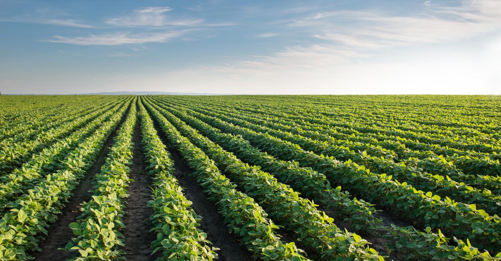 Croatan Institute Wins Major Award for Soil Wealth