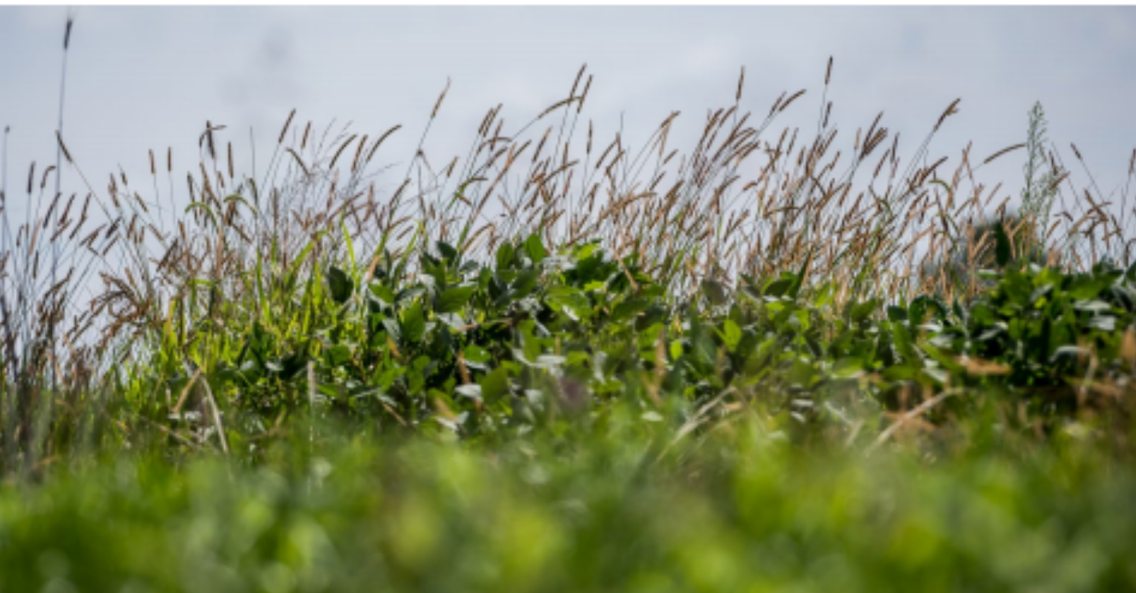 New Report on Investment in Climate-Smart Agriculture