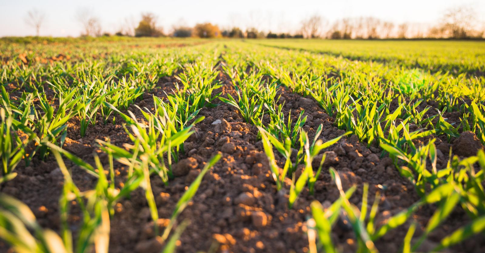 Soil Investment Hub
